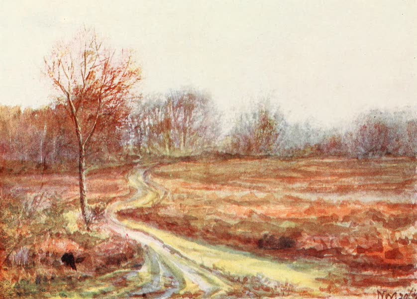 The New Forest Painted and Described - Cart Track over the Moor. Late November (1904)