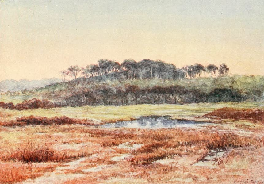 The New Forest Painted and Described - From Denny Wood, looking towards Wood Fidley. December Afternoon (1904)
