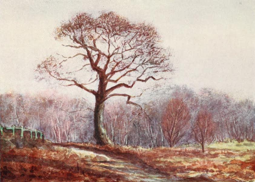The New Forest Painted and Described - Looking down Butts Lawn. Christmas Eve (1904)