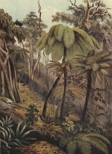 The New Zealanders Illustrated - Scene in New Zealand Forest near Porirua (1847)