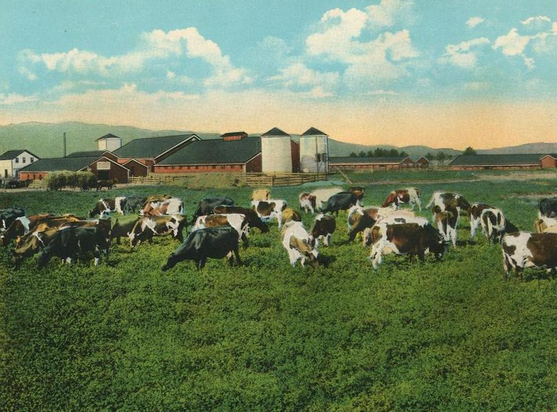 The Overland Trail - A Model Dairy at Dixon, Cal. (1920)