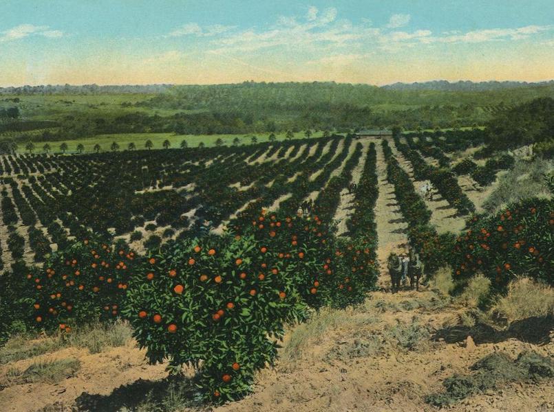 The Overland Trail - Orange Grove near Colfax, Cal. (1920)