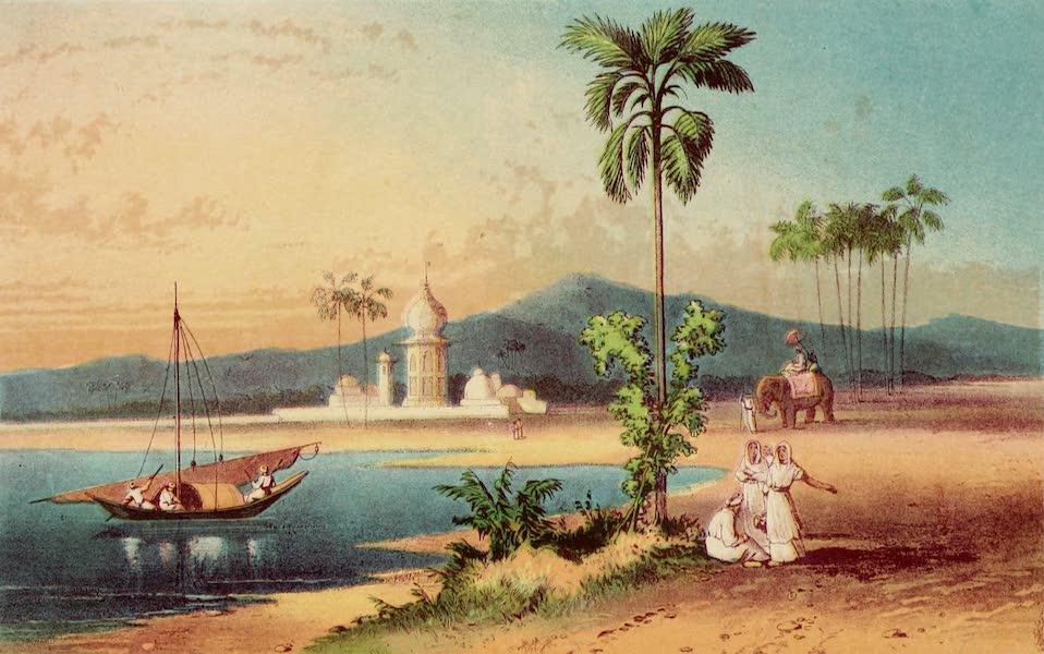 The Palm Tree - Palm of the Plain (1864)