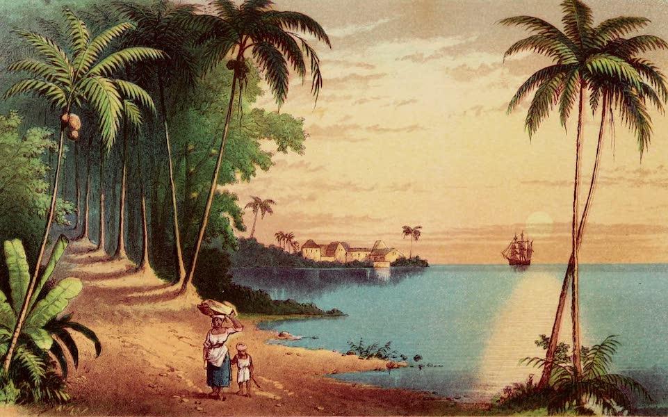 The Palm Tree - Coco Palms (1864)