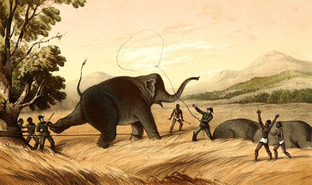 The Rifle and the Hound in Ceylon - Hold Fast (1854)