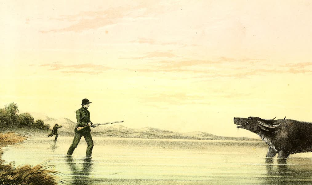 The Rifle and the Hound in Ceylon - The Charge of Sixpences (1854)