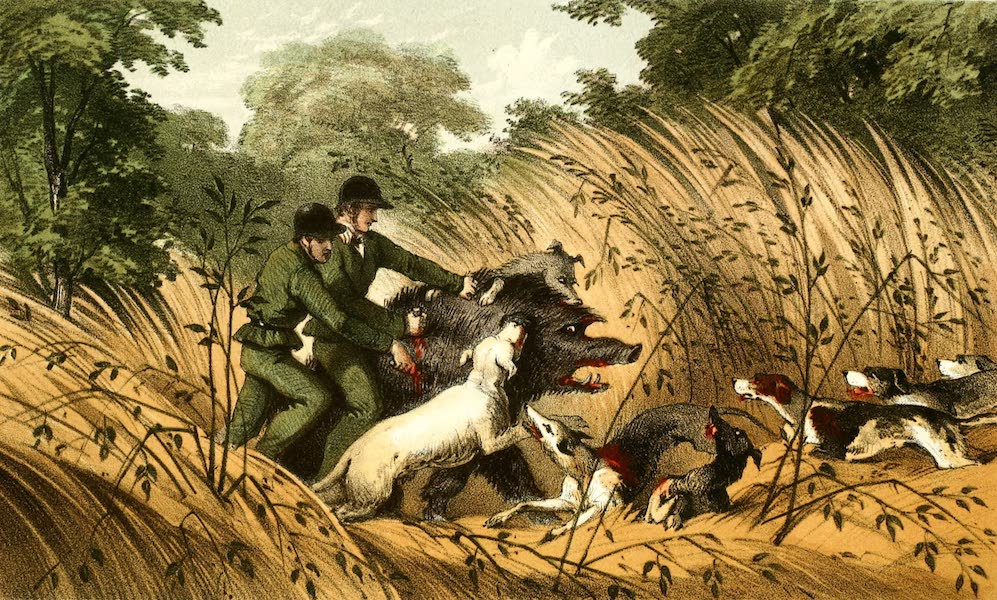 The Rifle and the Hound in Ceylon - A Melee (1854)