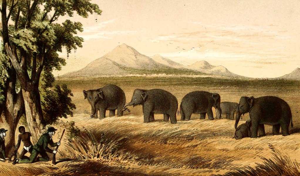 The Rifle and the Hound in Ceylon - Stalking a Herd (1854)