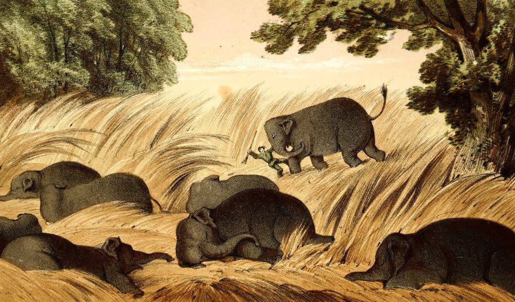 The Rifle and the Hound in Ceylon - Caught at Last (1854)