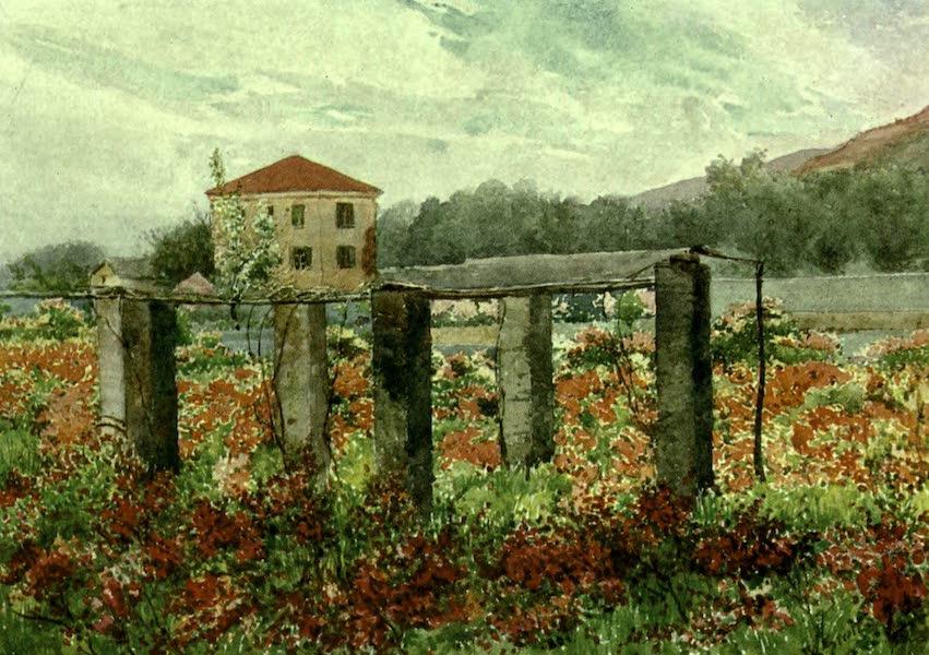 The Riviera Painted & Described - A Rose Garden, Bordighera (1907)