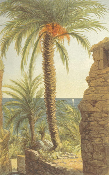 The Riviera: Pen and Pencil Sketches from Cannes to Genoa - Behind Bordighera (1870)