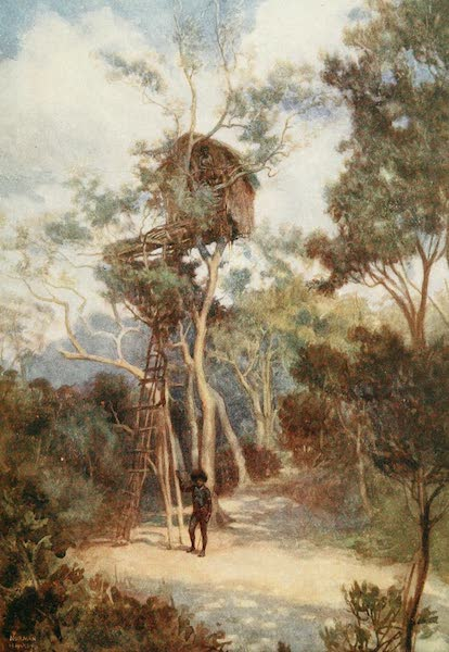 The Savage South Seas, Painted and Described - Tree House in British New Guinea (1907)