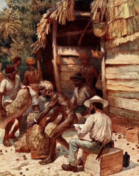 The Savage South Seas, Painted and Described - Johnnie Pratt with his Ivory Nuts at Simbo, Solomon Islands (1907)