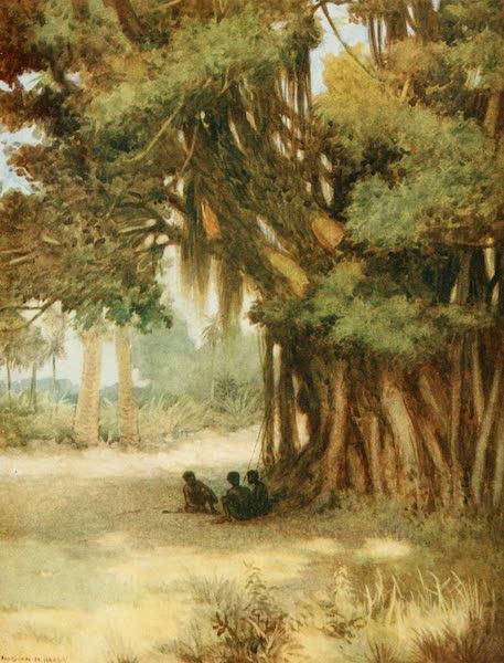 The Savage South Seas, Painted and Described - Beneath a Banyan Tree, Malekula Island, New Hebrides (1907)