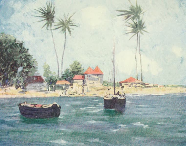 The West Indies, Painted and Described - Cocoanut Palms, Falmouth, Jamaica (1905)