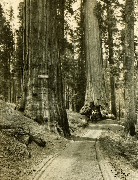 "Three Wonderlands of the American West - ""Vermont"" and ""Wawona,"" Mariposa Grove, California (1912)"