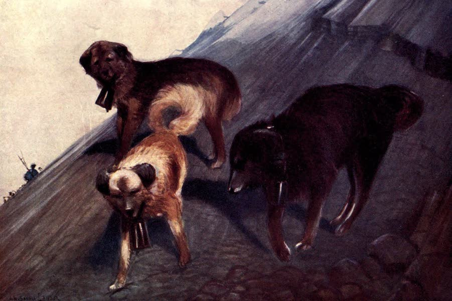 Tibet and Nepal, Painted and Described - Tibetan Dogs (1905)