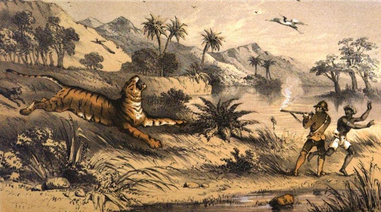 Tiger-Shooting in India - Tiger Killed by Chance Shot near Maidah (1857)