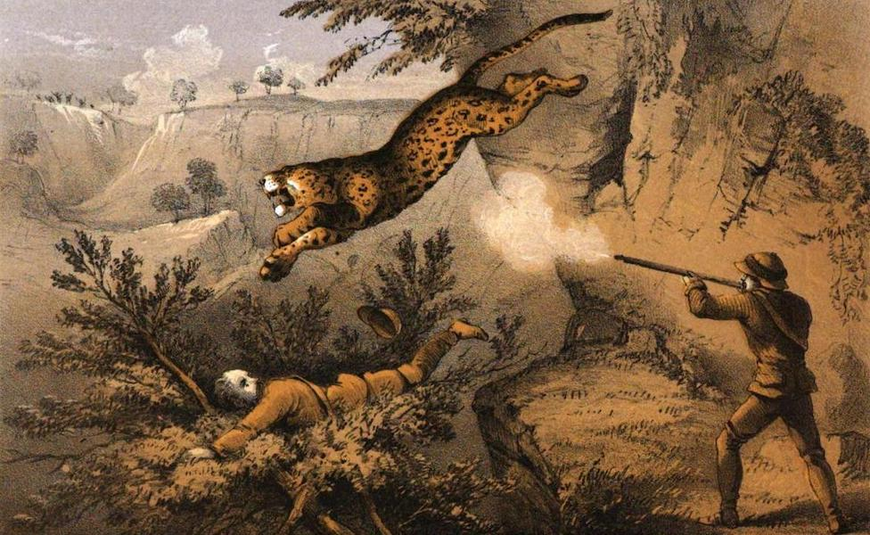 Tiger-Shooting in India - Jaat Panther Charging (1857)