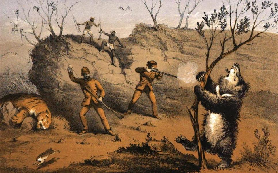 Tiger-Shooting in India - Slaughtering a Gigantic Bear (1857)