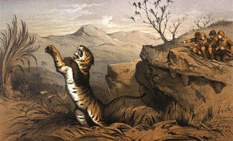 Tiger-Shooting in India - Booj Tiger (1857)