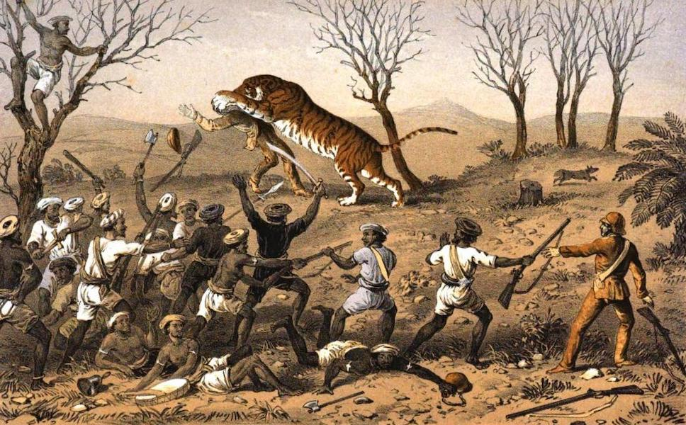 Tiger-Shooting in India - Elliot Being Seized (1857)