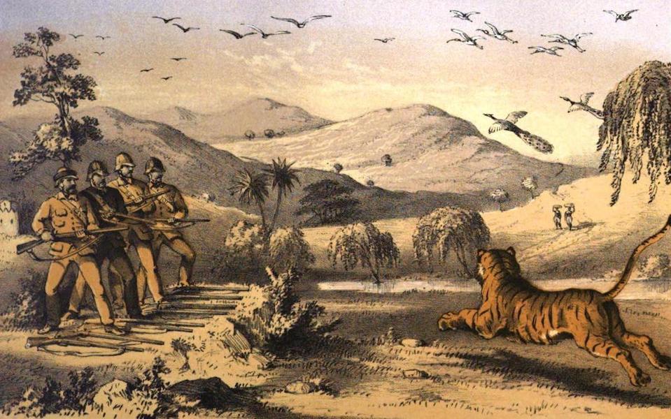 Tiger-Shooting in India - Murdering the Lohareea Tigress (1857)