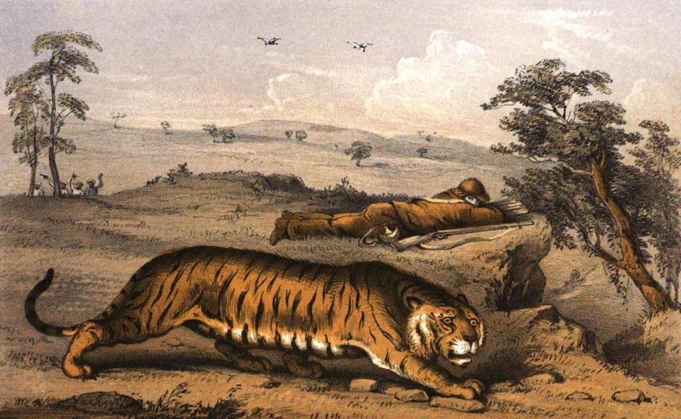 Tiger-Shooting in India - Last Tiger Seen (1857)