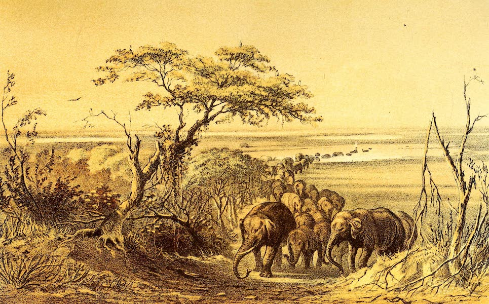 Travels and Discoveries in North and Central Africa Vol. 3 - Herd of Elephants near the Tsad (1857)