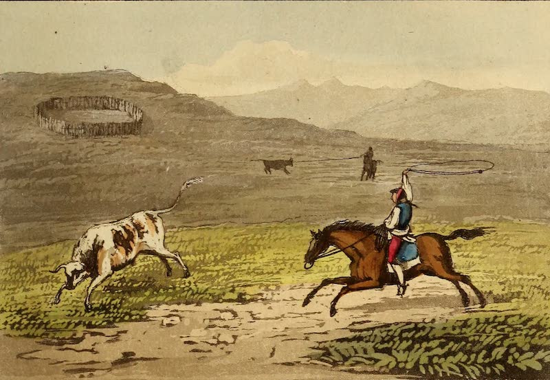 Travels in the Gold and Diamond Districts of Brazil - Peon Catching Cattle (1825)