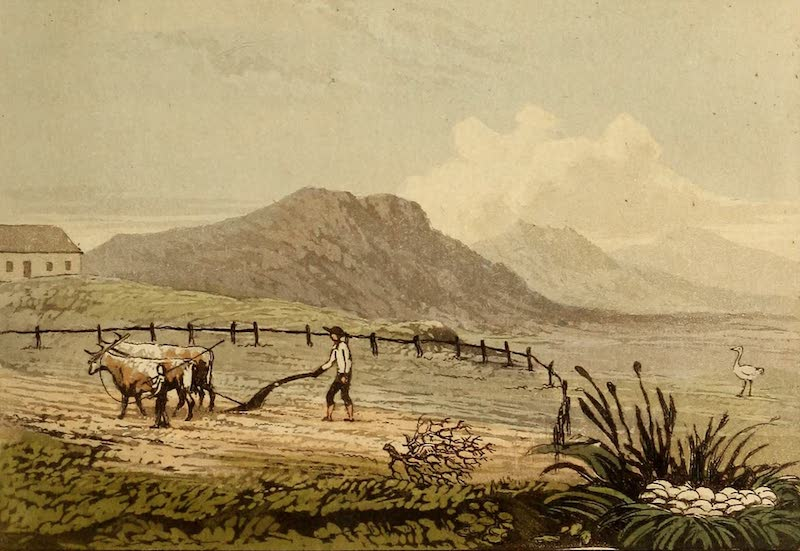 Travels in the Gold and Diamond Districts of Brazil - Ploughing for Wheat and Ostrich Nest (1825)