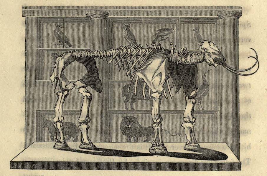 Travels Through Part of the Russian Empire - [Mammoth Skeleton] (1815)