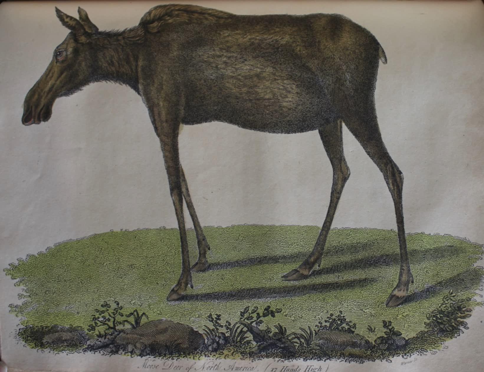 Travels Through the Canadas - Moose Deer (1807)