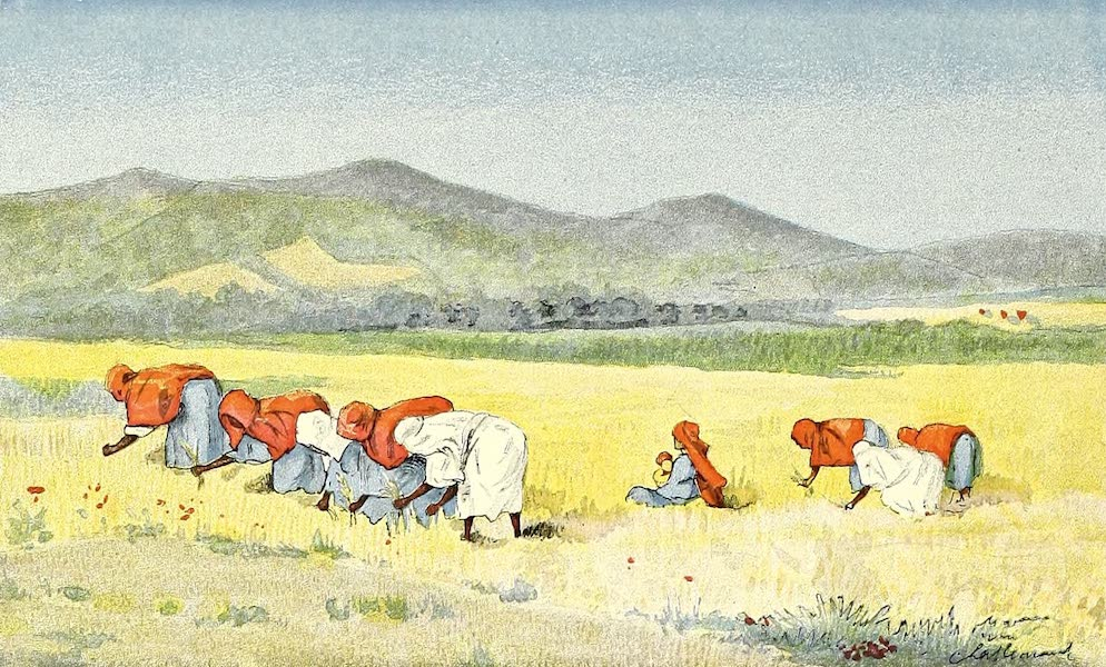 Moissonneurs tunisiens