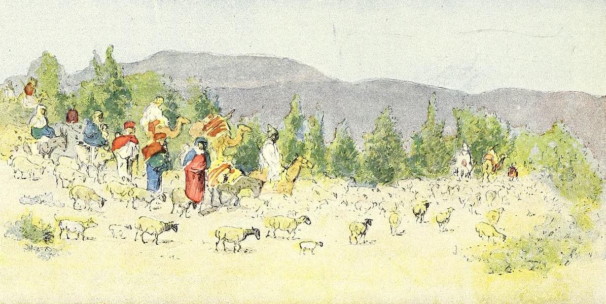 Caravane de nomades