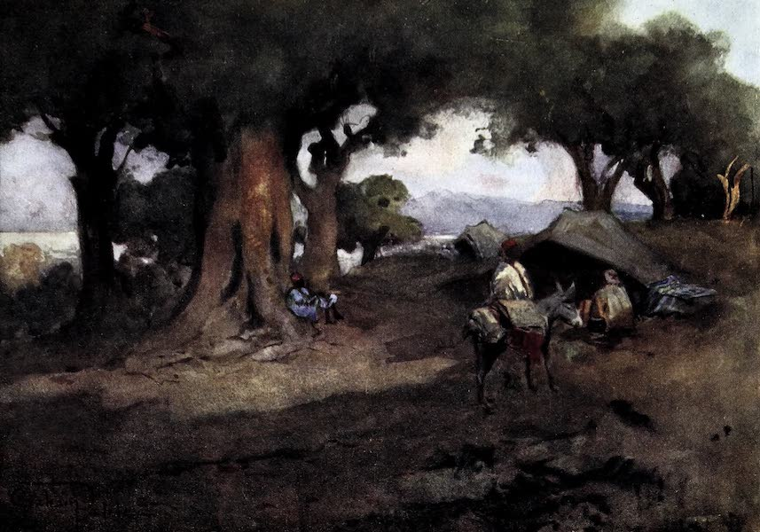 Tunis, Kairouan & Carthage - Olives and Bedouins near Tunis (1908)