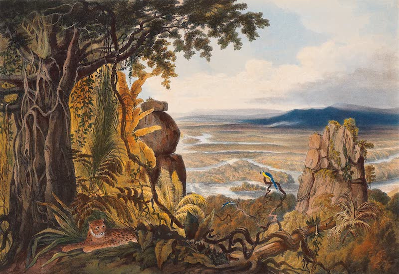 Twelve Views in the Interior of Guiana - The Comuti or Taquiari Rock (1841)