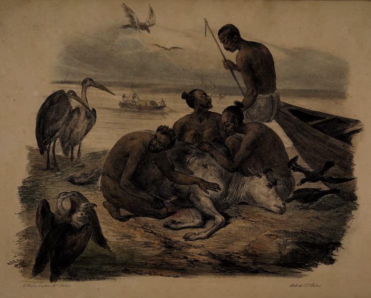 Twenty Four Plates Illustrative of Bengal - Men of low cast skinning a dead Bull (1832)