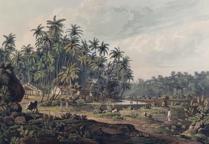 Twenty-Four Views Taken in St. Helena, the Cape, India, Ceylon, Abyssinia, and Egypt - View near Point de Galle, Ceylon (1809)