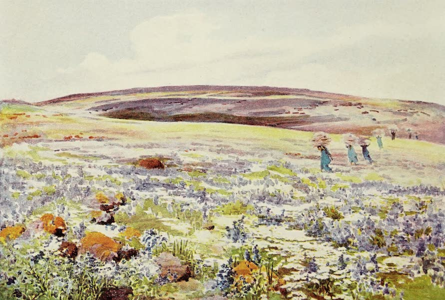 Under the Syrian Sun Vol. 1 - Galilee - Flowers near Karn Hattin (1907)