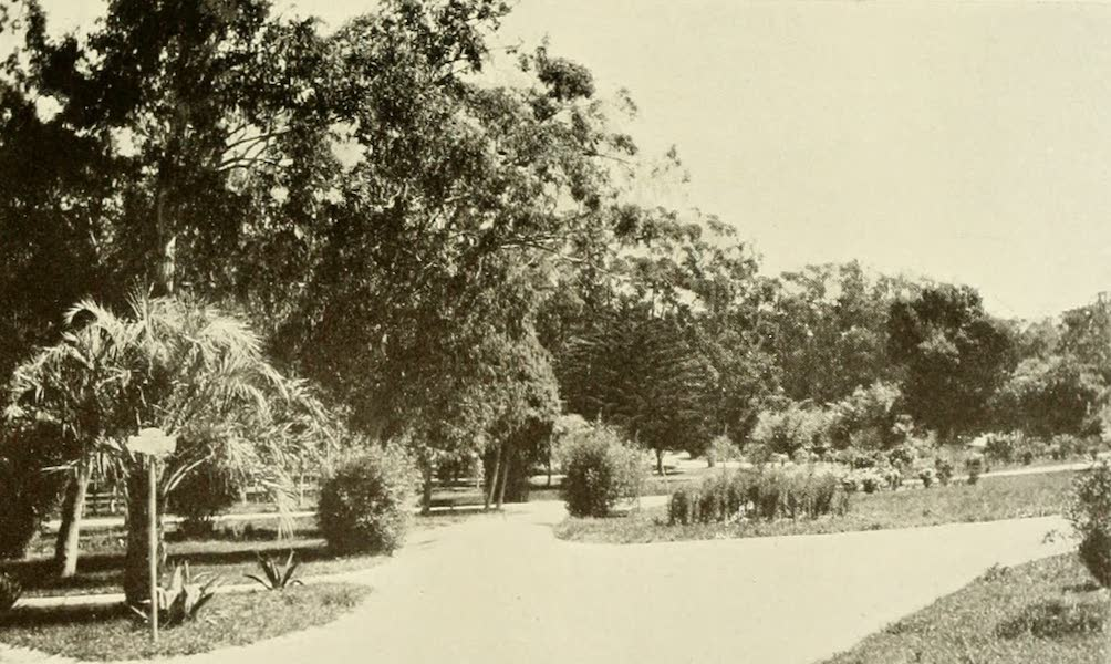 Uruguay by W. H. Koebel - The Prado : Montevideo (1911)