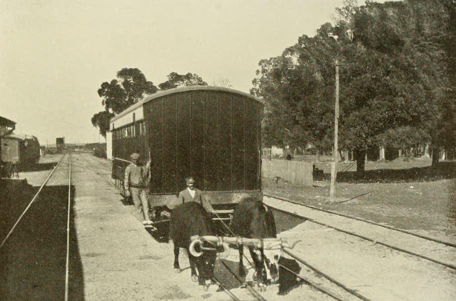 Uruguay by W. H. Koebel - Oxen Drawing Railway Coach (1911)
