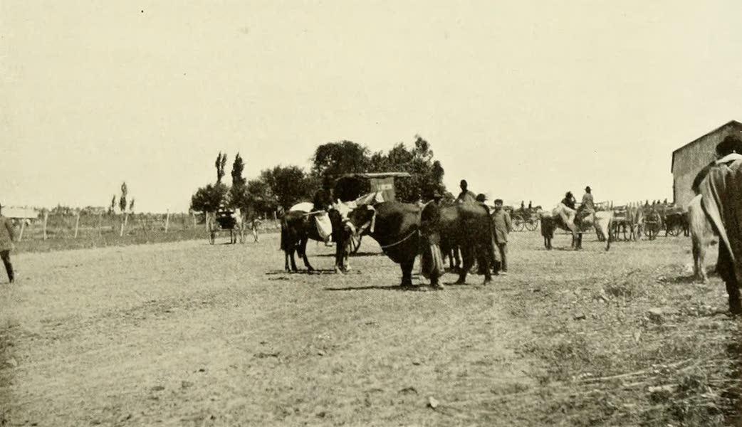 Uruguay by W. H. Koebel - Before the Fair : Tacuarembo (1911)