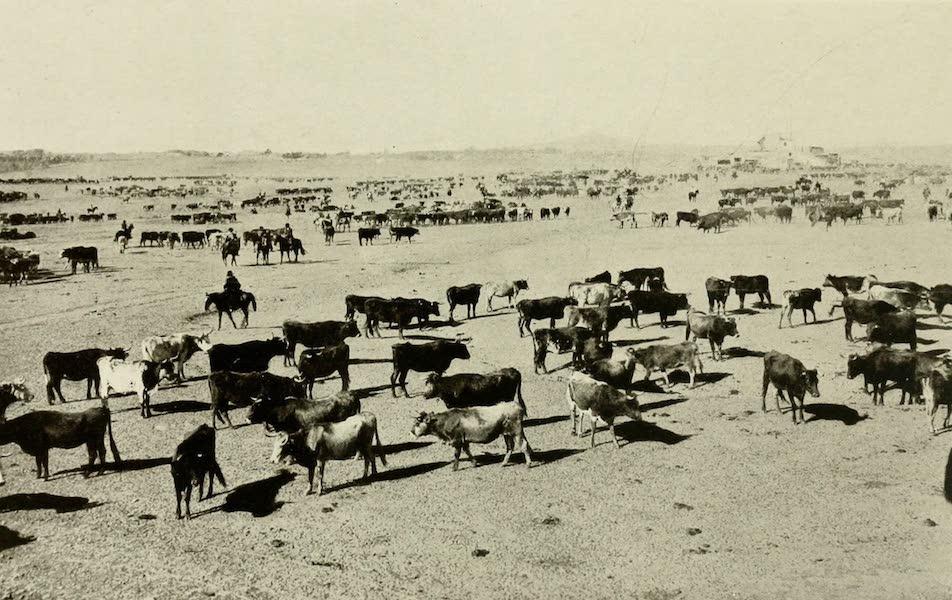 Uruguay by W. H. Koebel - A Pastoral Scene (1911)