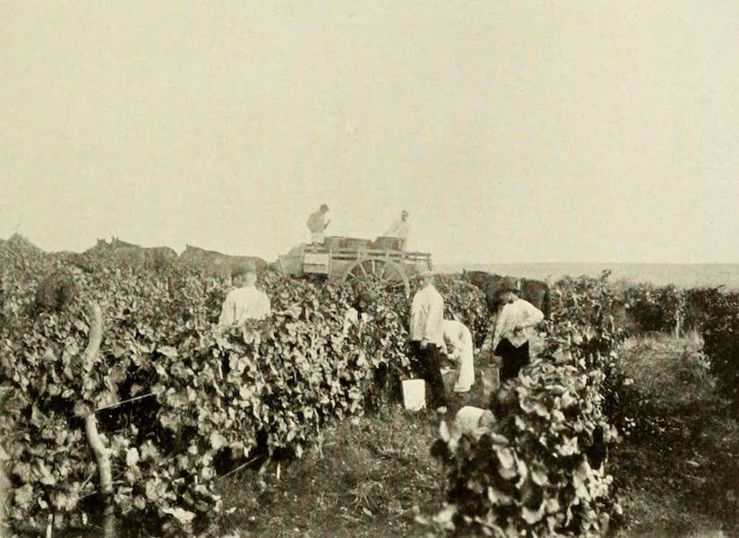 Uruguay by W. H. Koebel - The Vintage : Estancia San Juan (1911)