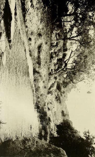 Uruguay by W. H. Koebel - Stream on the San Juan Estancia (1911)
