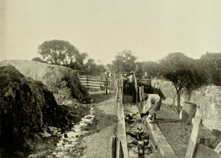 Uruguay by W. H. Koebel - The Cattle Dip (1911)