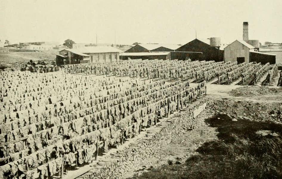 Uruguay by W. H. Koebel - Drying Jerked Meat (1911)