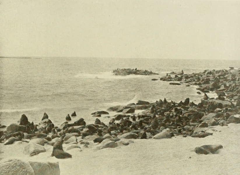 Uruguay by W. H. Koebel - A Seal Rookery (1911)