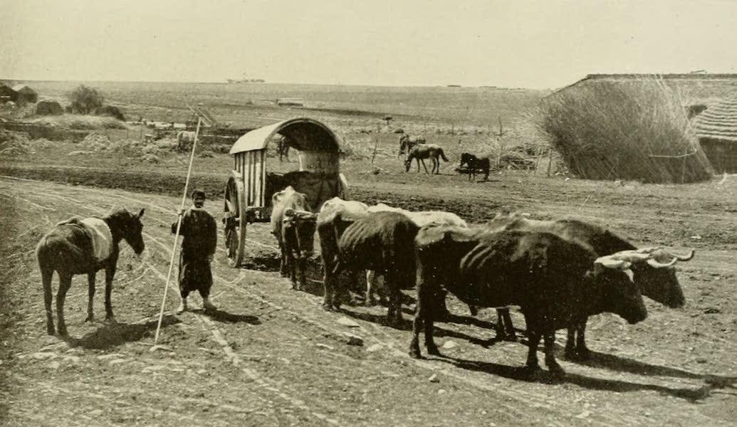 Uruguay by W. H. Koebel - Ox Wagon on the Campo (1911)